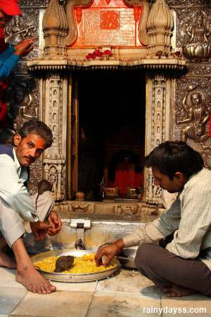Ratos Sagrados no Templo de Karni Mata