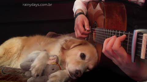 Golden Retriever adora escutar violão