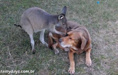 Cachorro e Canguru Trocando Carinhos
