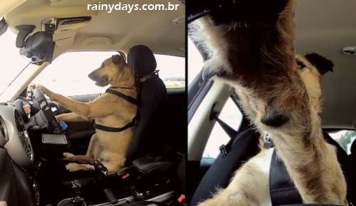 Porter o Primeiro Cachorro a Dirigir um Carro