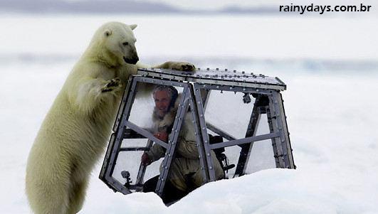 Repórter da BBC Encontra um Urso Polar de Pertinho 2