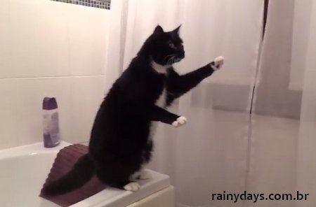 Gato se Vê no Espelho e Faz Poses