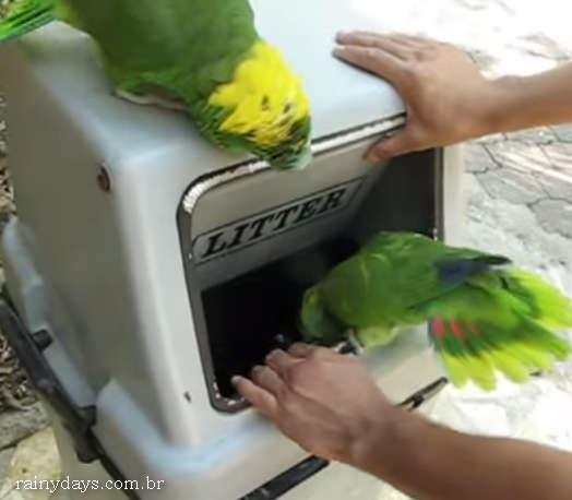 Dois Papagaios Que Fazem Som de Mulher Rindo