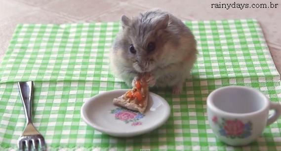 Hamster Pequenininho Comendo Pizza