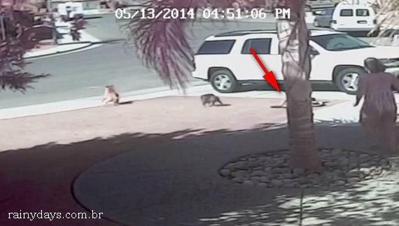 Menino de 4 Anos é Salvo de Ataque de Cachorro por um Gato
