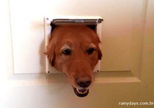 Cachorros se Revesam no Buraco da Porta