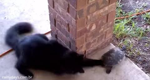 Tartaruga e Gato Brincando de Pique-Esconde