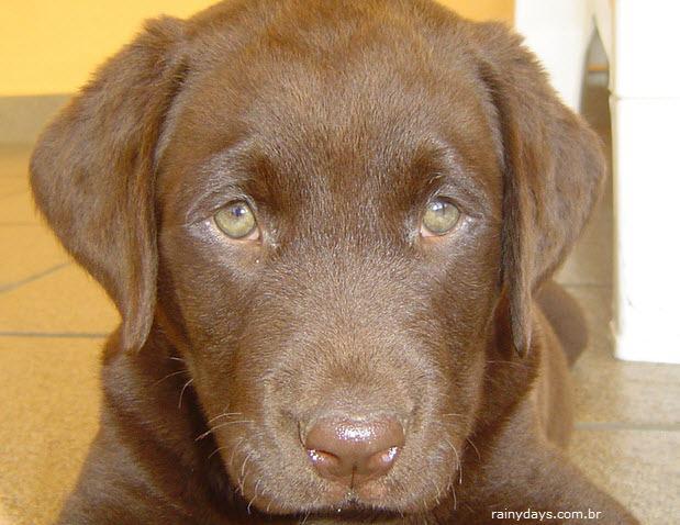 Descobrir idade correta do cão em relação aos humanos