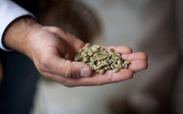 Benefícios do café verde para emagrecer