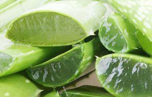 Benefícios da aloe vera para a pele e para a saúde