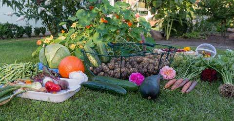 Verduras e legumes da estação verão
