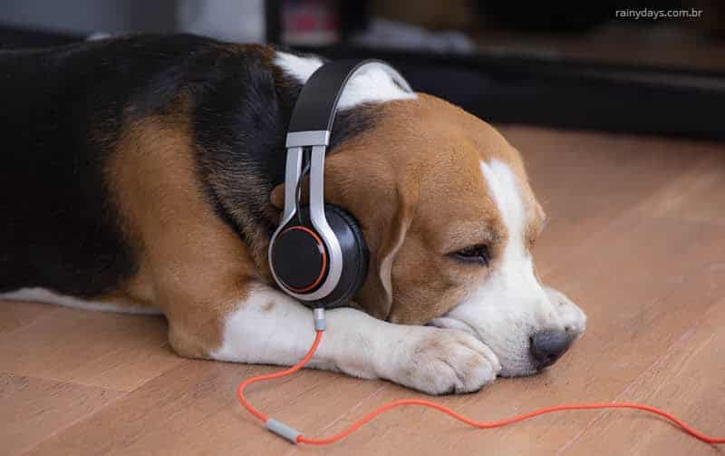 Benefícios da música para cachorros e gatos